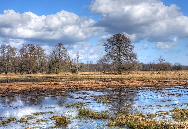 geflutete Spreewaldwiesen bei Raddusch