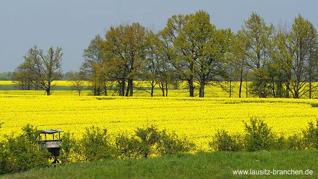 Bioenergie-Tagung in Zittau