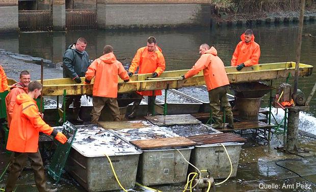 Peitz - Ausbildungsmöglichkeiten in Brandenburger Fischereibetrieben