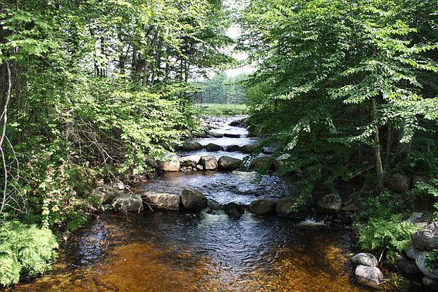 Neue Fischtreppe im Spreewald