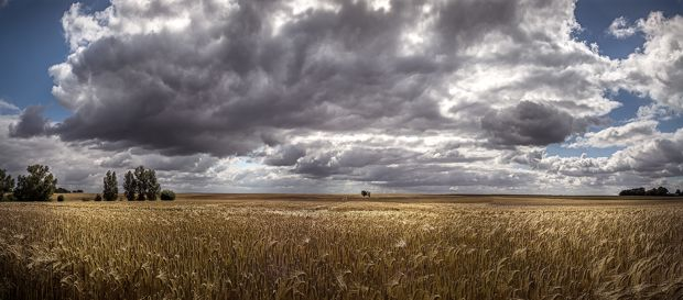 Maßnahmen gegen den Ausverkauf der ostdeutschen Landwirtschaft