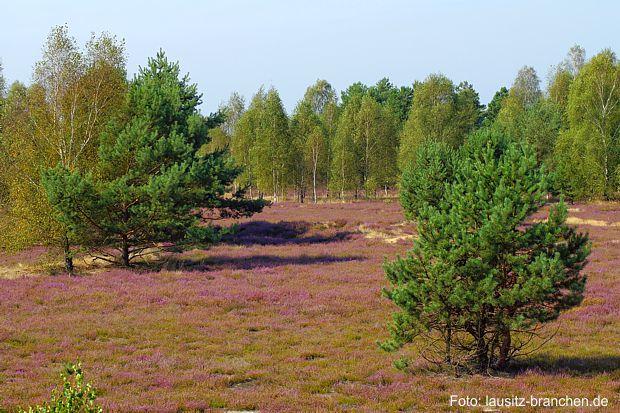 Naturparkregion Niederlausitzer Heidelandschaft