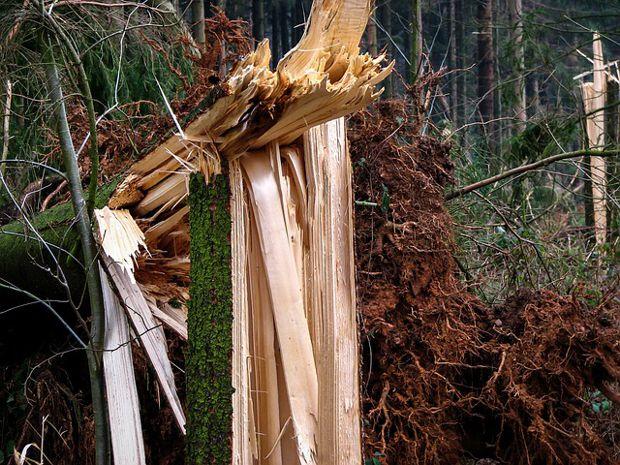 Schadmenge für den Gesamtwald im Land Brandenburg beträgt schätzungsweise eine Million
