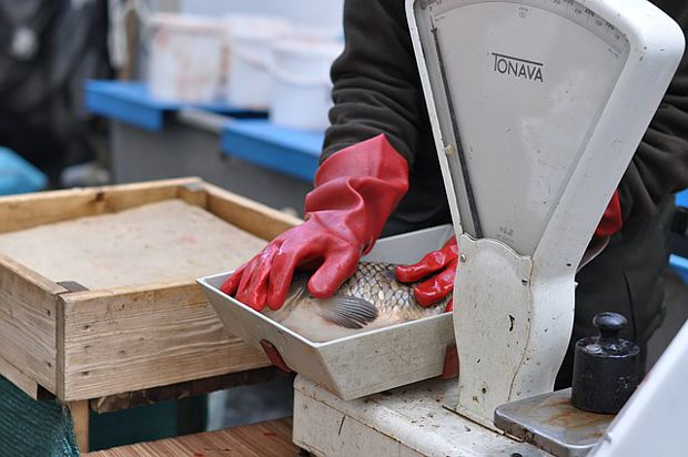 Fischerei Oberlausitz Sachsen