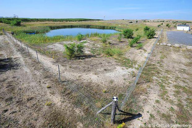 Auf dem Hühnerwassergelände wird die Entwicklung eines künstlich geschaffenen Quellgebiets im Rekultivierungsbereich des Tagebaus Welzow-Süd erforscht.