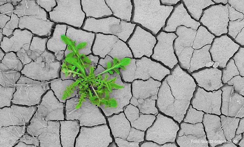 Bauernbund zu Klöckners Dürrehilfe