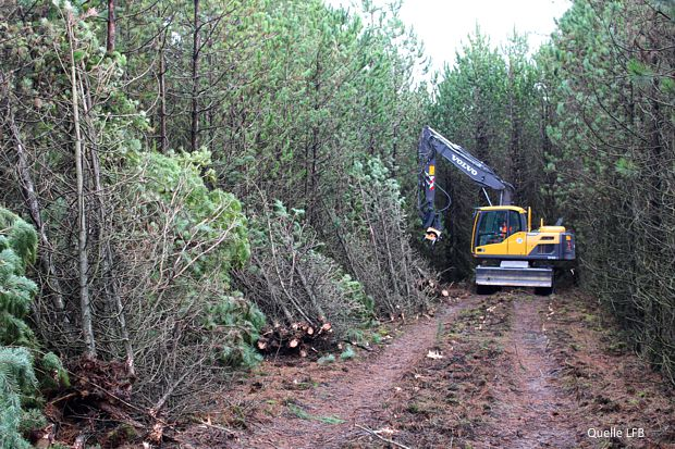 Bekämpfung des gefährlichen Baumpilzes