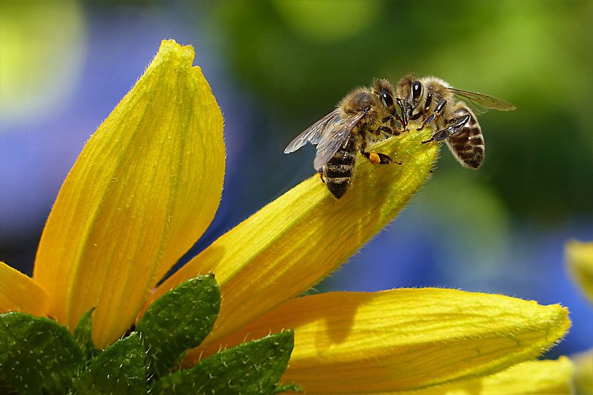 Weltbienentag: Bienen und Imkerei in Brandenburg