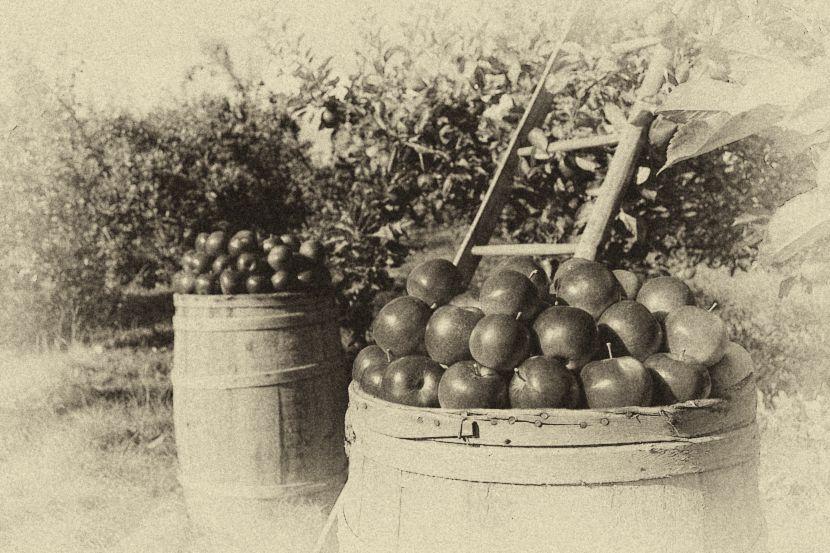 Historischer Obstgarten - Schatz in der Niederlausitz