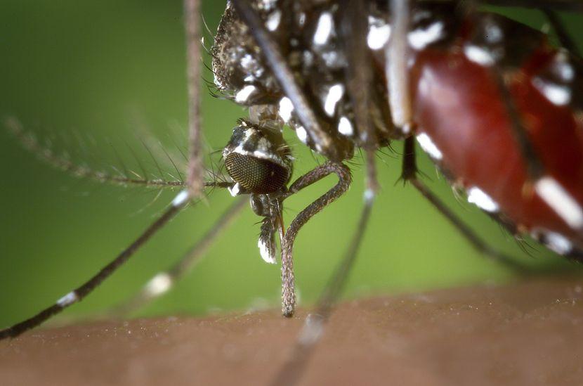 West-Nil-Virus in SPN und Cottbus