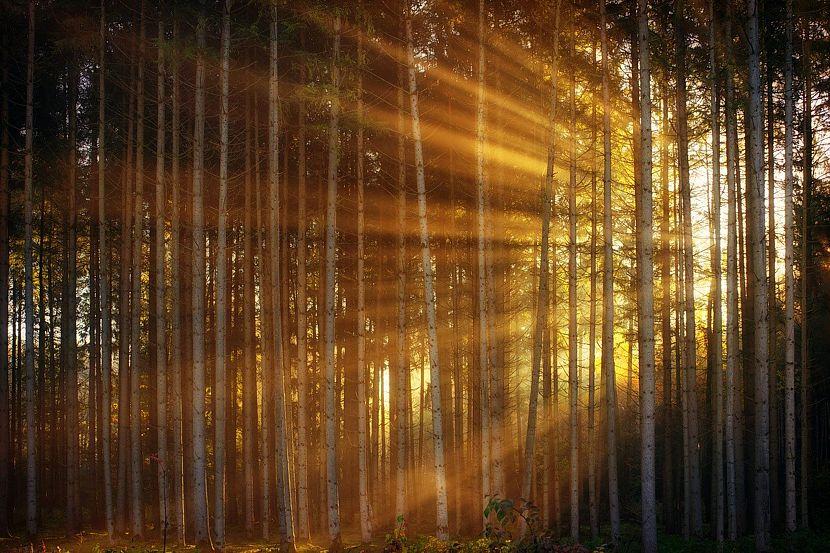 Schulung für Waldbesitzer