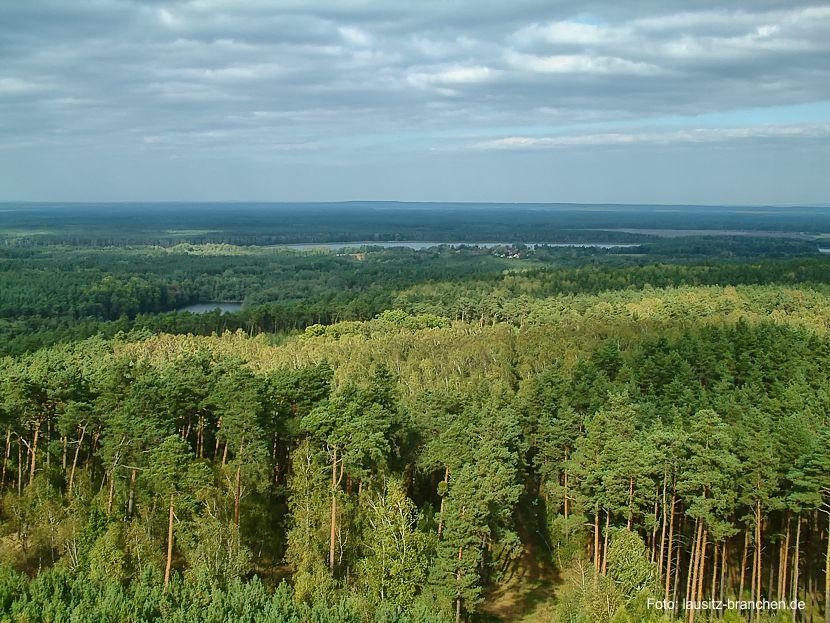 Brandenburgs Wälder für den Klimawandel fit machen