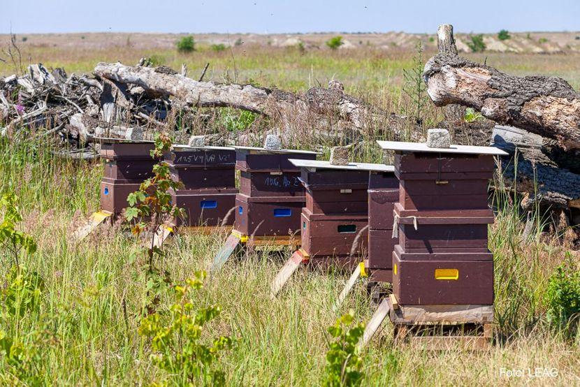 Honig- und Wildbienen auf Rekultivierungsflächen