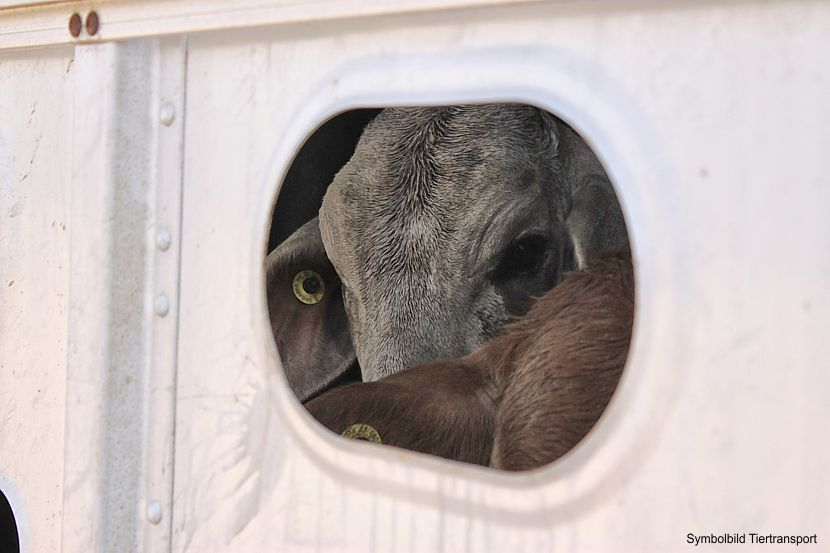 Tiertransporte in Drittländer werden ausgesetzt