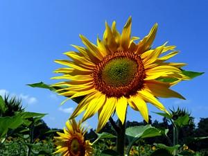 Blühendes Projekt hilft Bienen