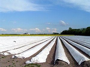 Brandenburger Gemüseanbau 2013