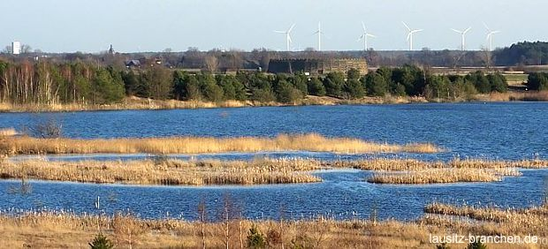 Windkraftplanung und Artenschutz